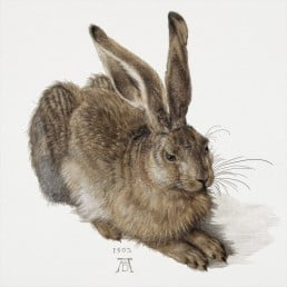 Durer Rabbit Graphic