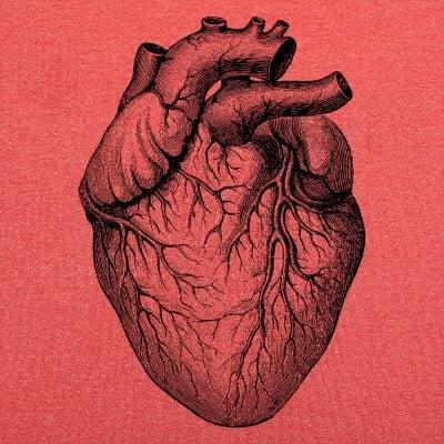 Human Heart T-Shirt   6 Dollar Shirts